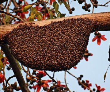 Čebelji vosek in njegova uporaba